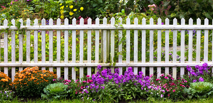 Decorate your fence with plants and shrubs